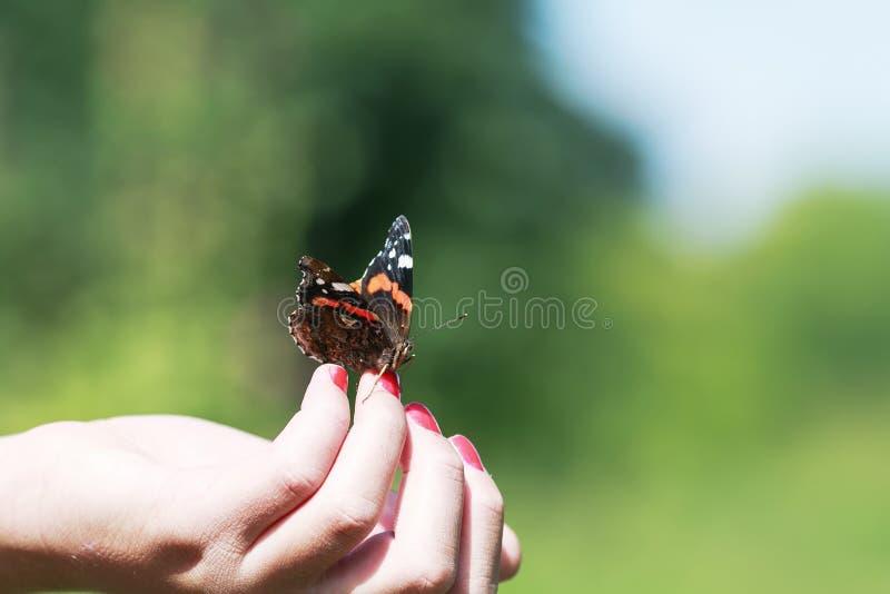 fjärilsamiralkrypning på fingerflicka i vår P royaltyfri foto