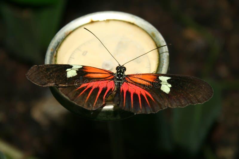 fjärilsblommapassion arkivfoto