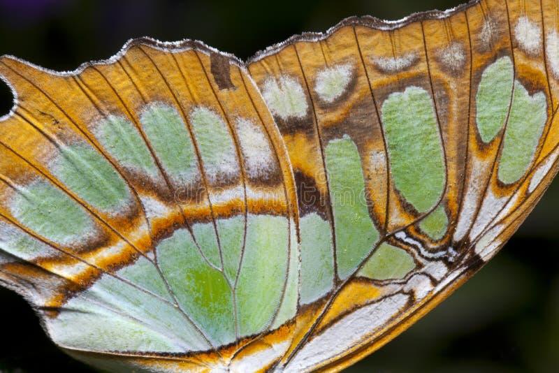 fjärilscloseupvinge arkivfoto