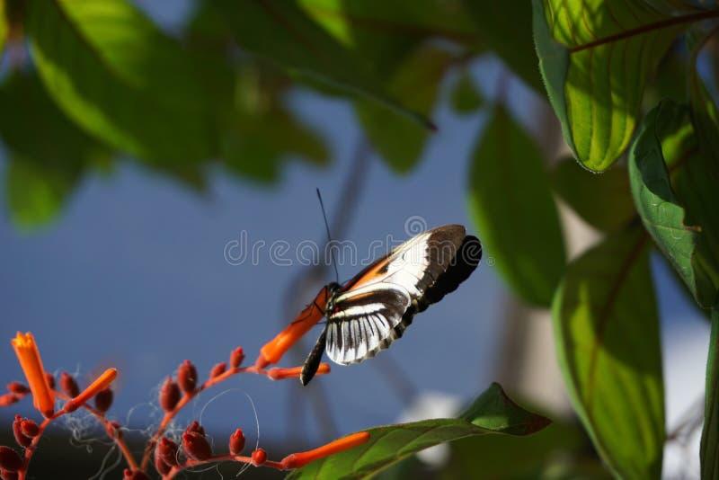 fjärilsflorida värld arkivfoton
