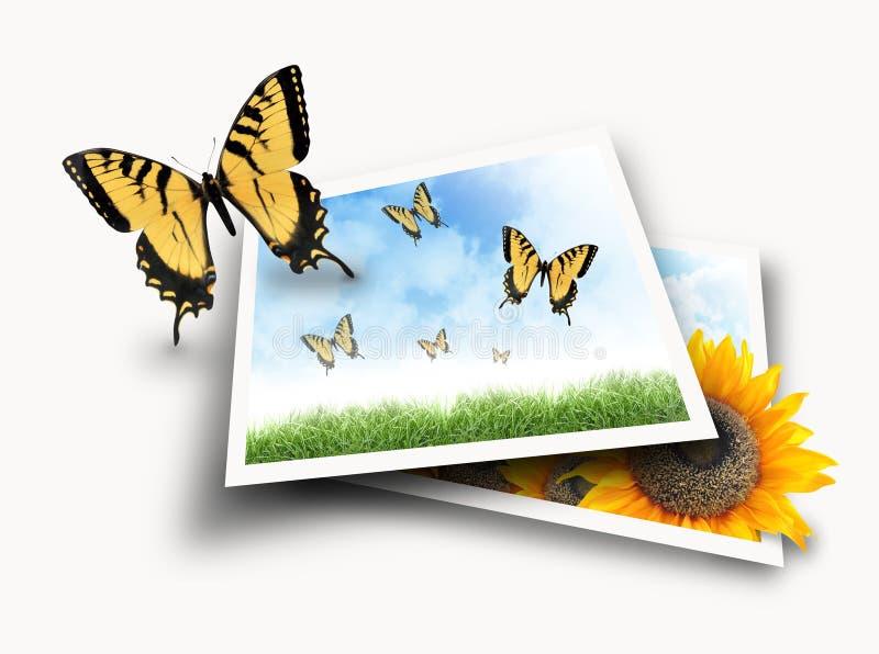 fjärilsflygnaturen ut fotograferar bilder vektor illustrationer