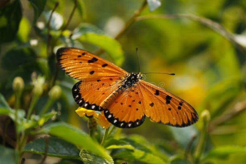 Fjärilsfotografi royaltyfri fotografi