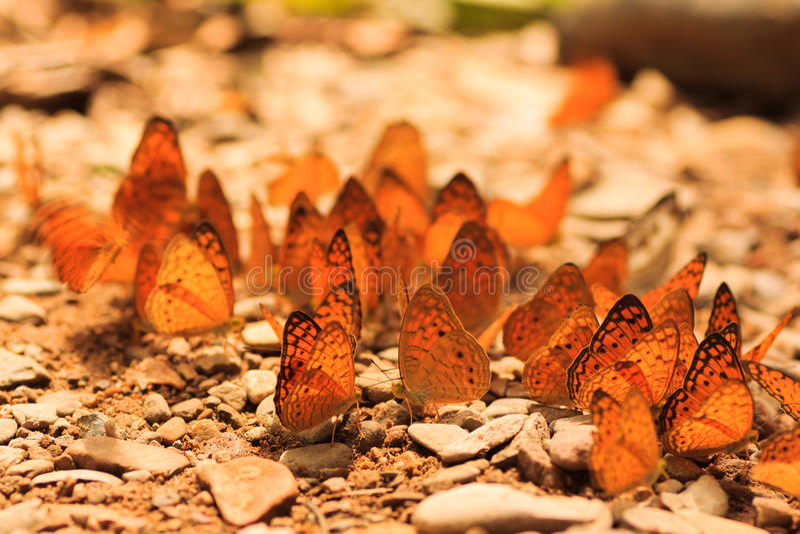 Fjärilsgrupp arkivfoton