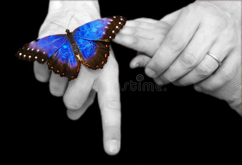 Fjärilslandning royaltyfri fotografi
