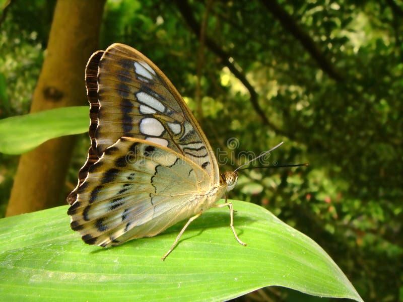 fjärilsleaf arkivbilder