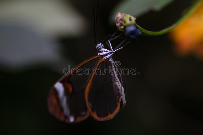 Fjärilsmakro fotografering för bildbyråer