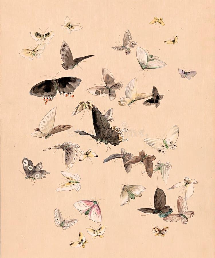 fjärilsmalvattenfärg royaltyfri illustrationer