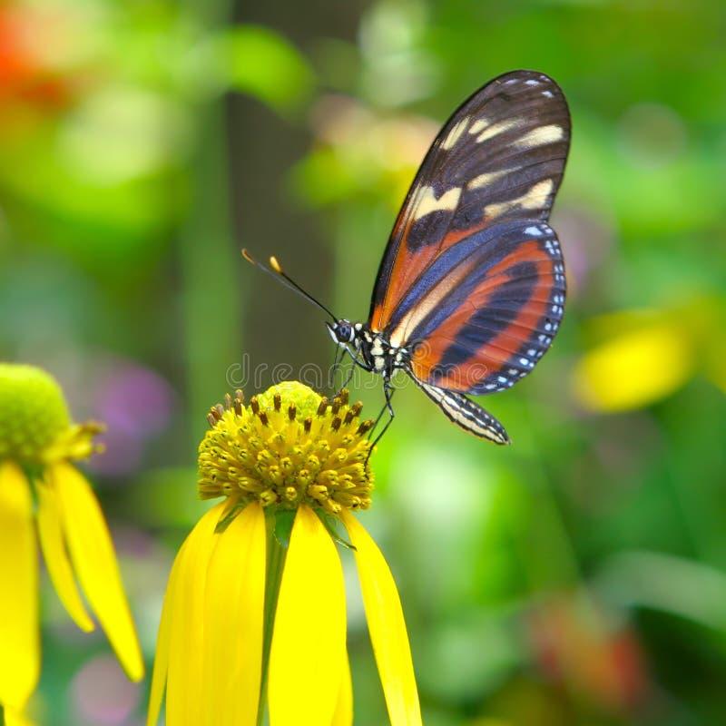 fjärilsmatning arkivbild