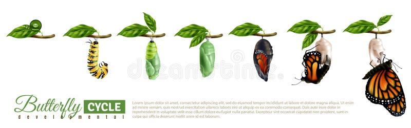 Fjärilsmetamorfoshorisontaluppsättning stock illustrationer