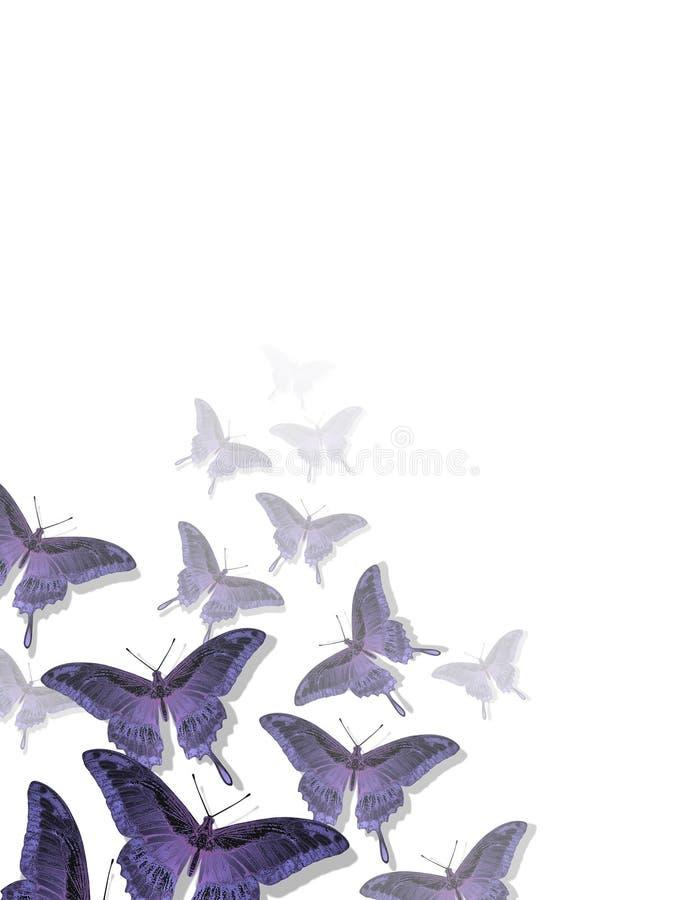 fjärilsmodell vektor illustrationer