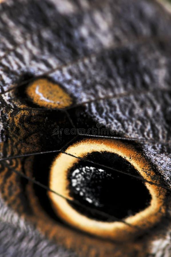 fjärilsowlen spots vingen fotografering för bildbyråer