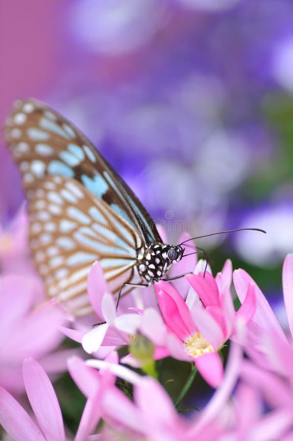 fjärilsparadis royaltyfria bilder