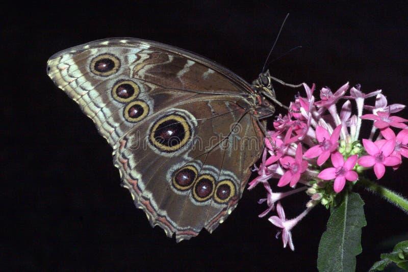 fjärilsrest arkivfoton