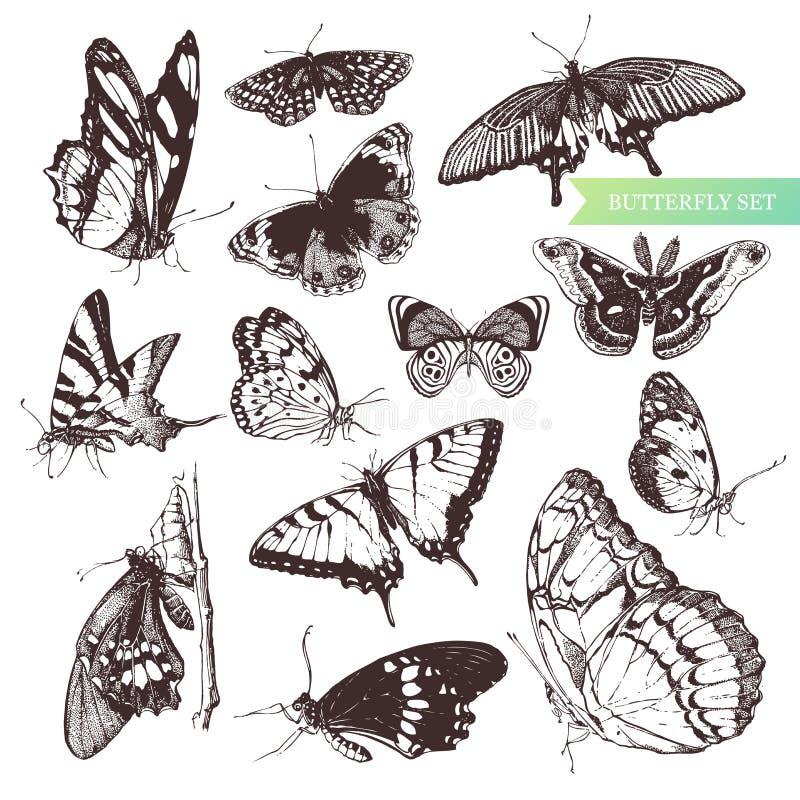 fjärilsset royaltyfri illustrationer