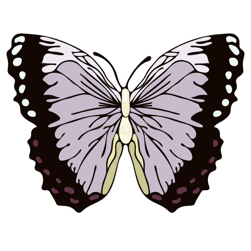 Fjärilstecknad filmteckning, vektorillustration Abstraktion dragen fjäril med lilasvartvingar som isoleras på vit bakgrund, I stock illustrationer