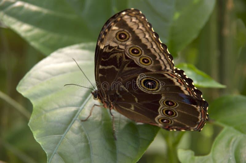 Fjärilsträdgård i det nationella museet av Costa Rica royaltyfri bild