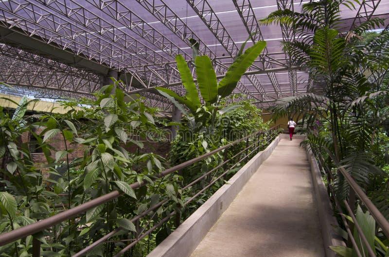 Fjärilsträdgård i det nationella museet av Costa Rica royaltyfri foto