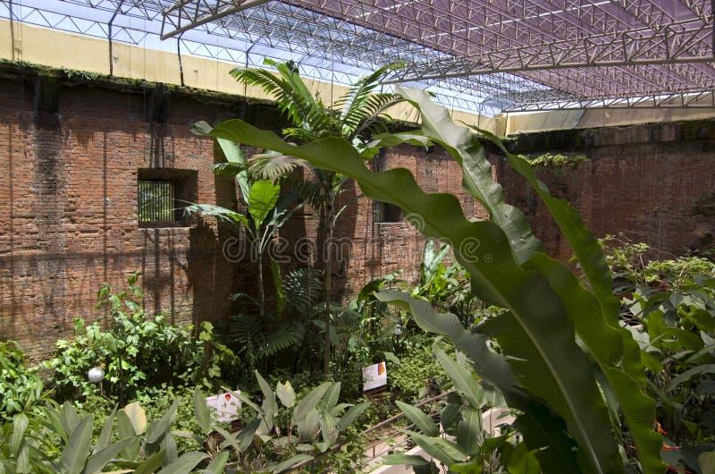 Fjärilsträdgård i det nationella museet av Costa Rica arkivfoton