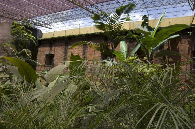 Fjärilsträdgård i det nationella museet av Costa Rica fotografering för bildbyråer