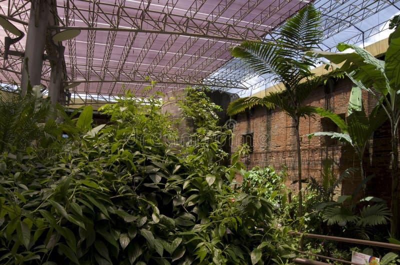 Fjärilsträdgård i det nationella museet av Costa Rica arkivbilder