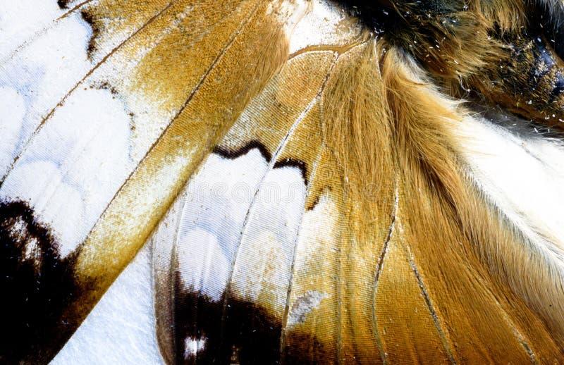 Fjärilsvinge i makroCloseup royaltyfria bilder