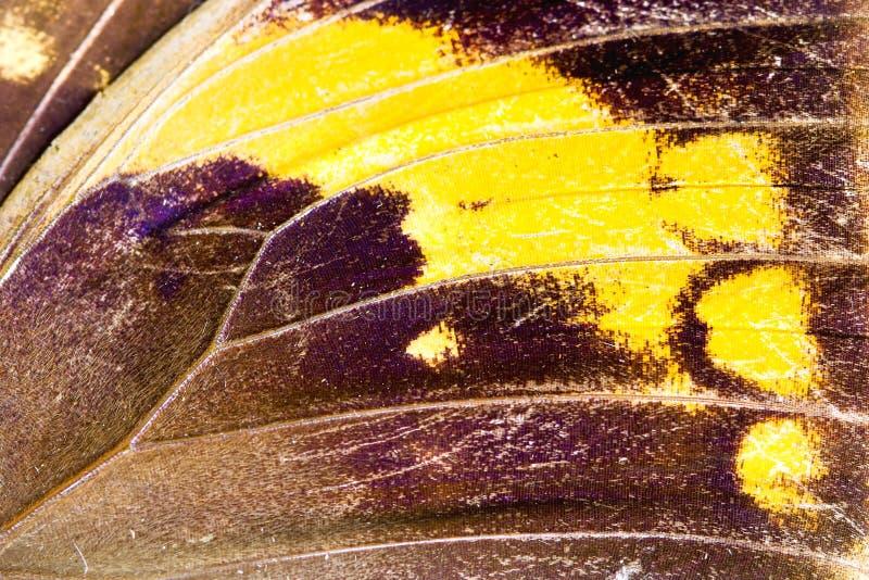 Fjärilsvingslut upp royaltyfri foto