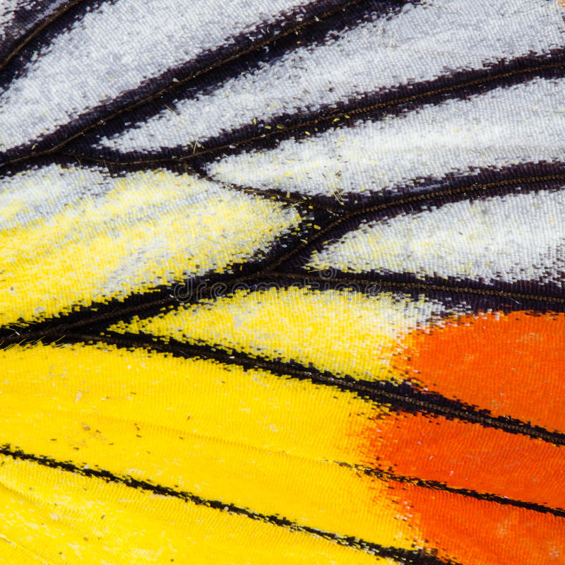 Fjärilsvingtextur arkivbild