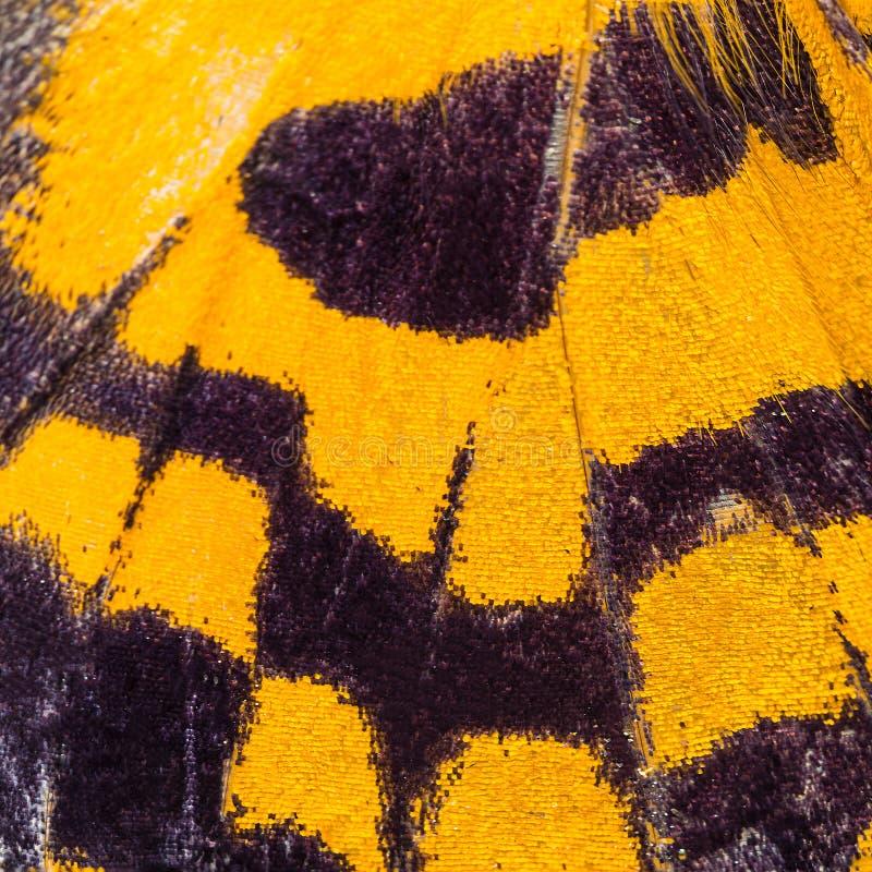 Fjärilsvingtextur, slut upp av detaljen av fjärilsvingen för royaltyfri foto