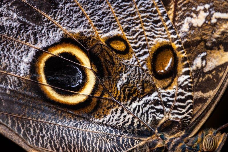 Fjärilsvingtextur, slut upp av detaljen av fjärilsvingen för bakgrund fotografering för bildbyråer
