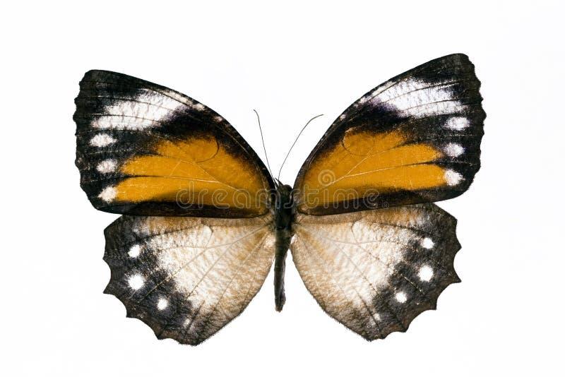 fjärilsyellow arkivfoto