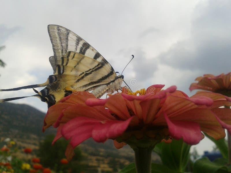 Fj?ril och blomma royaltyfri foto