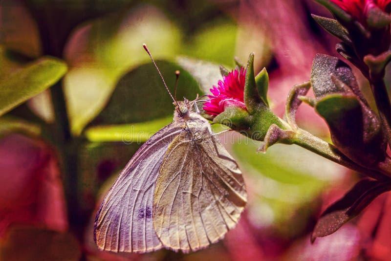 Fj?ril p? en rosa blomma fotografering för bildbyråer