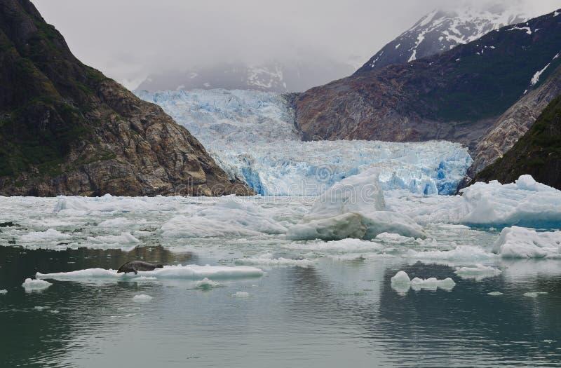 Fjord de bras de Tracy, glacier de Sawyer photos stock