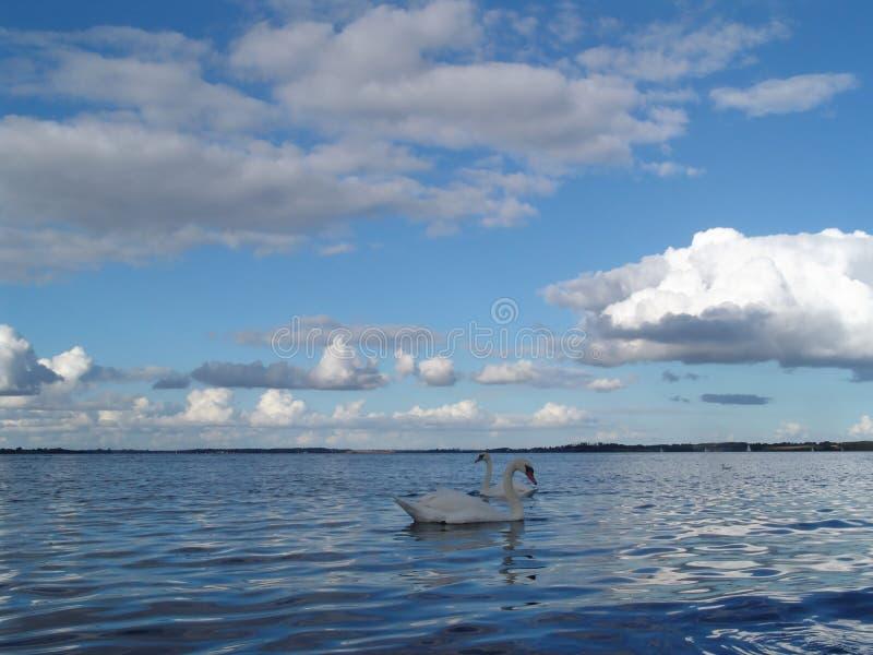 Download Fjord met zwanen stock afbeelding. Afbeelding bestaande uit kusten - 281309