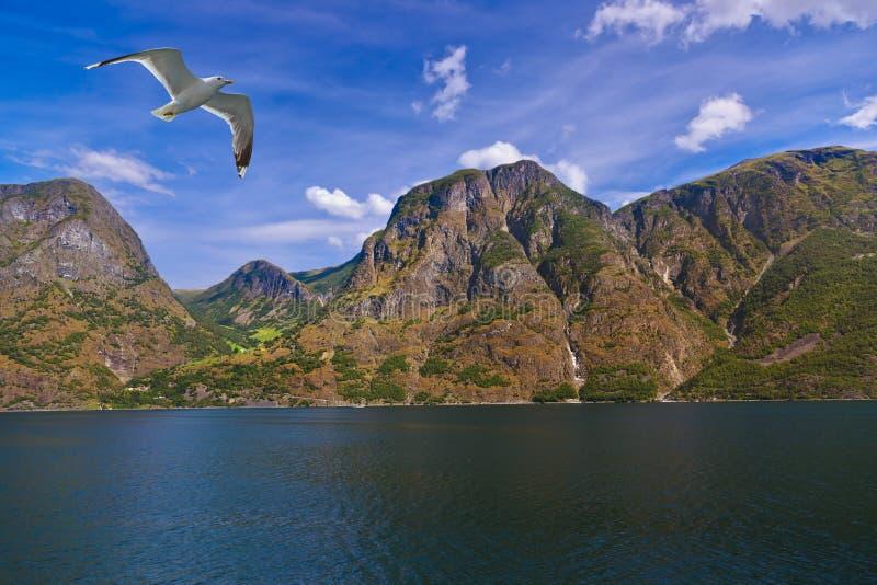 Fjord Naeroyfjord en Norvège - site célèbre de l'UNESCO image stock