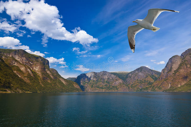 Fjord Naeroyfjord in Norwegen - berühmter UNESCO-Standort lizenzfreies stockfoto