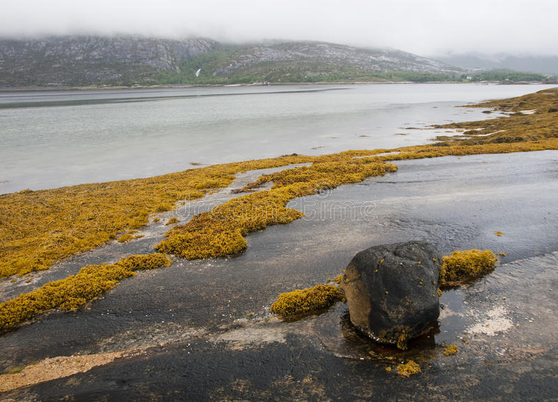 Fjord Rocky Shore With Seaweed Stock Photography