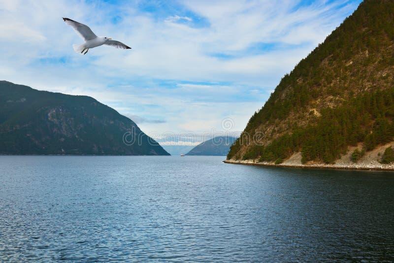 Fjord Sognefjord - Norvège photographie stock