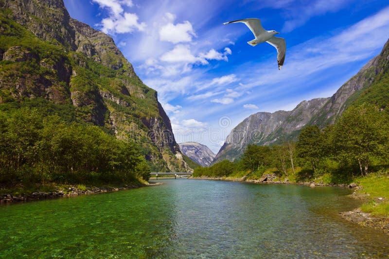 Fjord Sognefjord - Norvège images stock