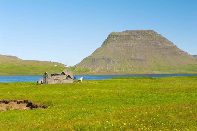 Fjord und ein Pferd lizenzfreies stockbild