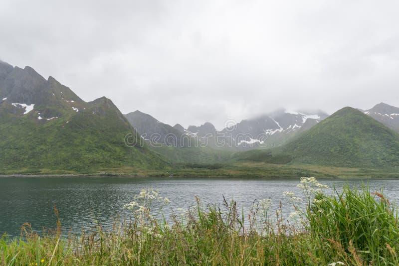 Fjorde Norwegens Lofoten - Berge bedeckt durch Schnee im mittleren des Sommers lizenzfreie stockbilder