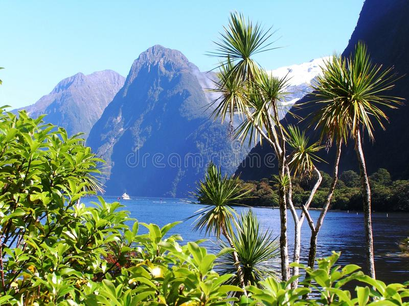 Fjords de Nova Zelândia fotografia de stock