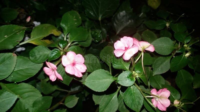 fkower和绿色叶子 免版税库存照片