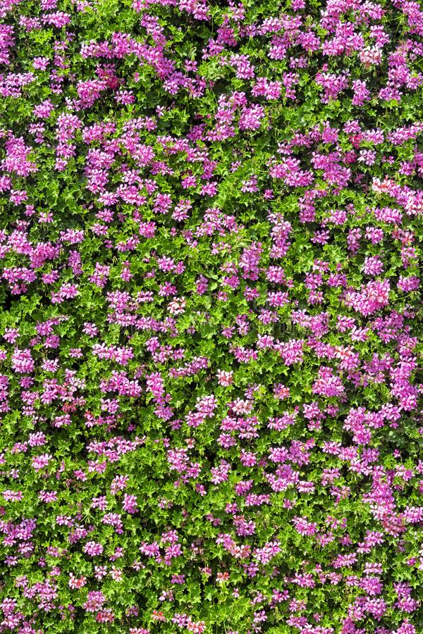 Fläckvägg med blommor royaltyfria foton