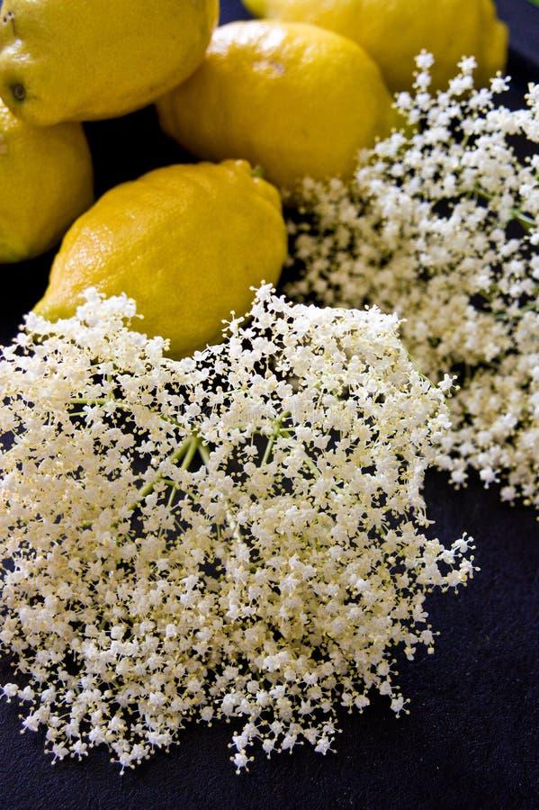 Fläderbärblom med citroner för hemlagad sund sirap royaltyfria foton