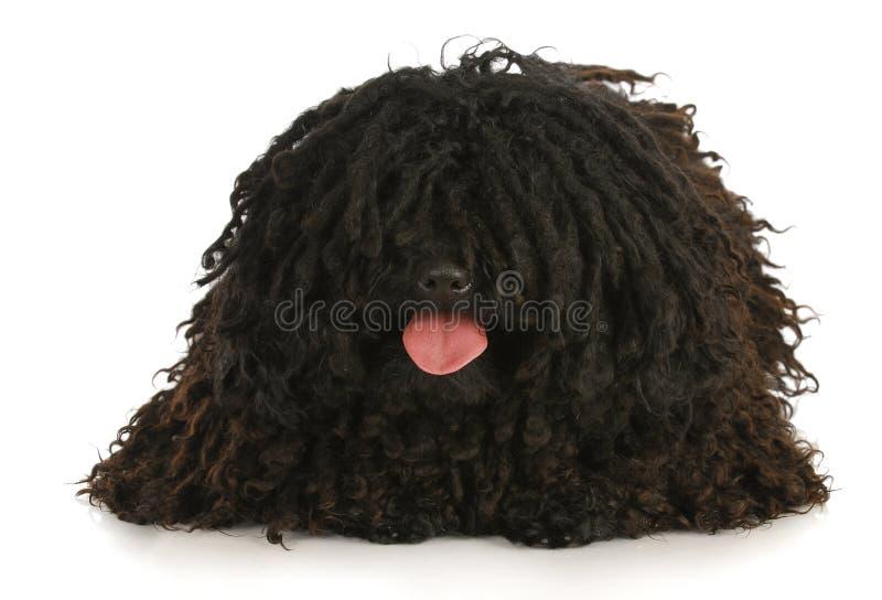 flåsa för hund royaltyfri bild