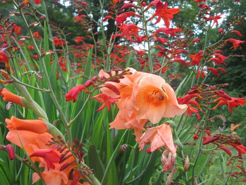 flöda för blommor arkivbild
