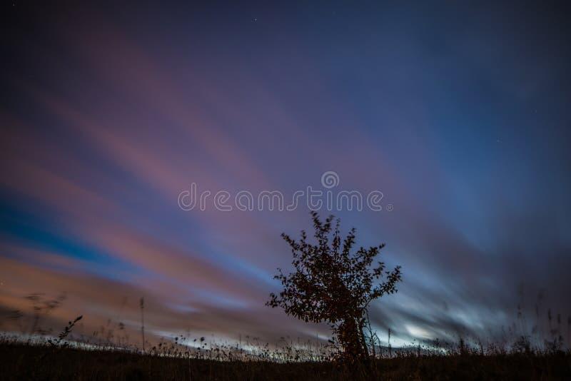 Flöda och träd för moln för natthimmel royaltyfri fotografi