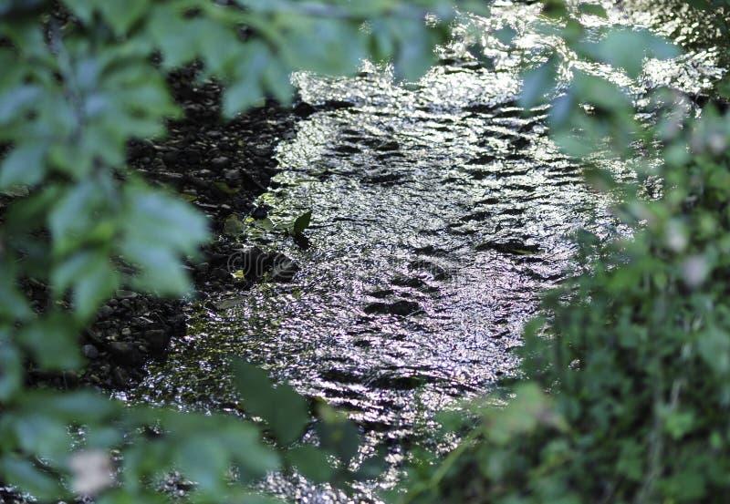 Flödande flod till och med inramade sidor royaltyfria foton