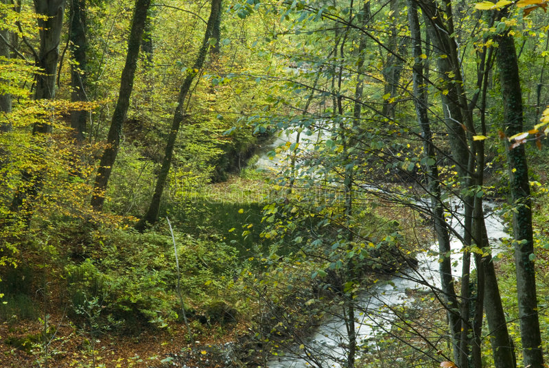 flödande skog för bäck royaltyfri bild